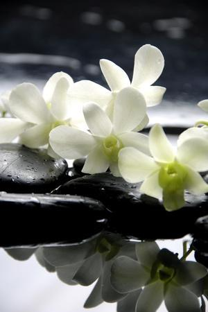 https://imgc.allpostersimages.com/img/posters/zen-stones-and-branch-white-orchids-with-reflection_u-L-Q1038GE0.jpg?p=0
