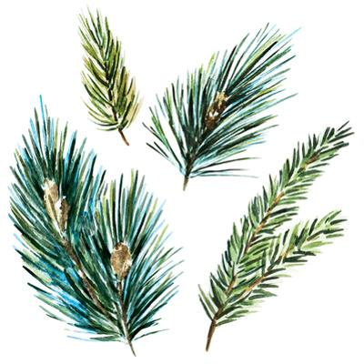 Watercolor Fir Tree Branches by Zenina