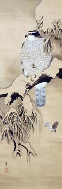Hawk on Snowy Branch by Zeshin Shibata