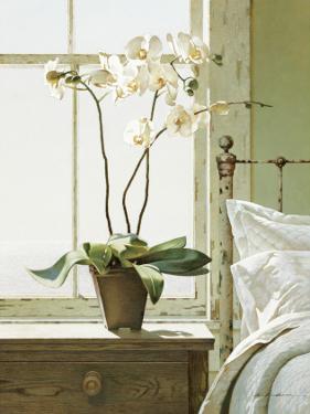 Bedside Orchid by Zhen-Huan Lu