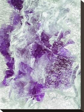 Purple Dragon by Zina Zinchik