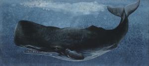 Zoology: Fishes: Mammalia, Cetacea, Sperm Whale