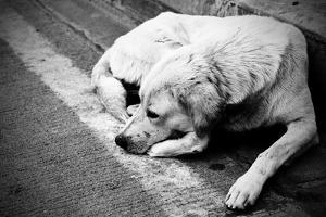 Homeless Stray Dog by Zoom-zoom