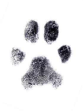 Dog Fingerprint by zothen