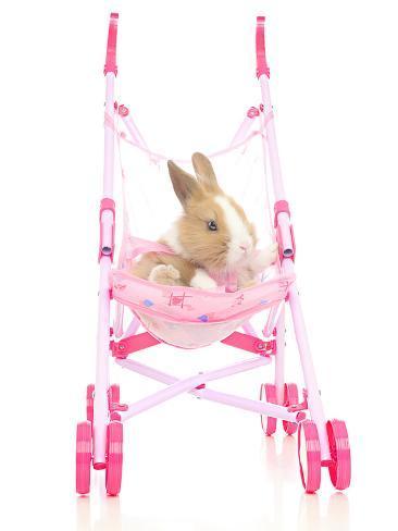 Rabbits 009 Reproduction photographique