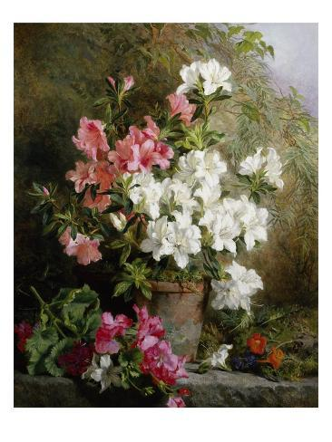 Still Life of Azaleas Reproduction procédé giclée