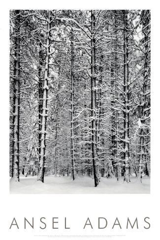 Forêt de pins enneigée, parc national Yosemite, 1932 Reproduction d'art