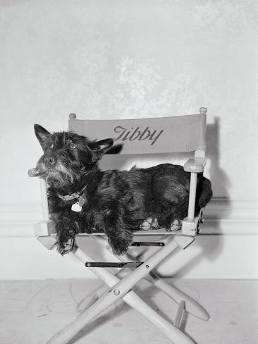 Bette Davis's Dog Tibby Reproduction photographique