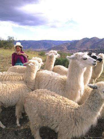 Inca Woman in Costume with Llamas, Cuzco, Peru Reproduction photographique