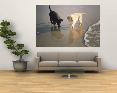 Deux chiots retriever trottent dans l'eau sur la plage Poster géant