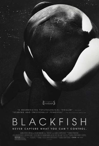 Blackfish Movie Poster Affiche originale