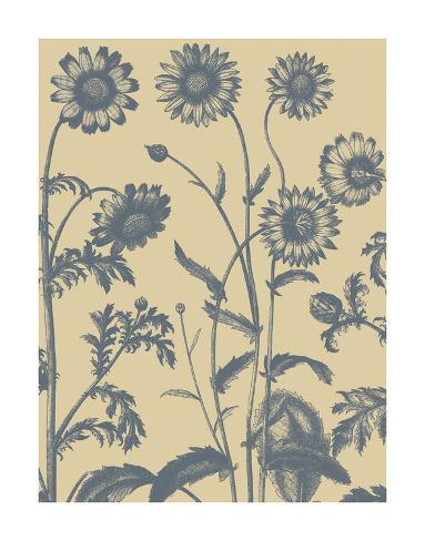 Chrysanthemum 1 Reproduction d'art