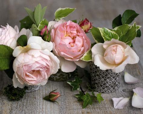 Trois Roses Reproduction d'art
