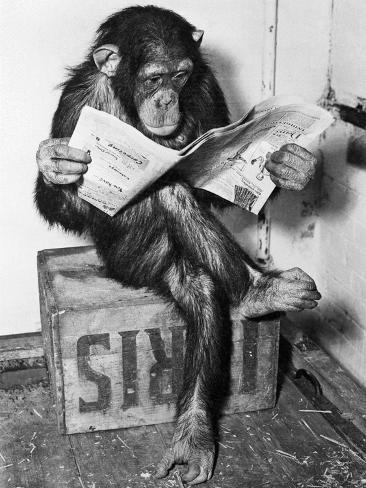 Chimpanzé lisant le journal Reproduction d'art