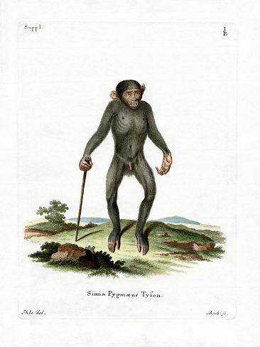 Chimpanzé Reproduction procédé giclée