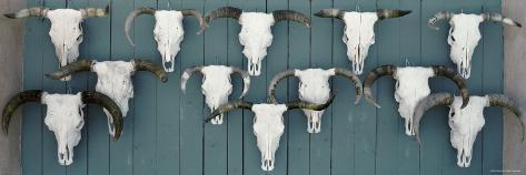 Cow Skulls Hanging on Planks, Taos, New Mexico, USA Reproduction photographique