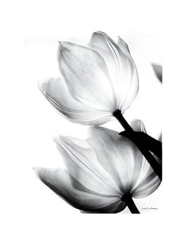 Translucent Tulips II Reproduction d'art
