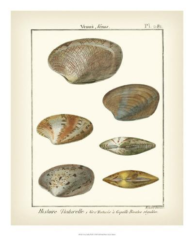 Venus Shells, Pl.281 Reproduction procédé giclée