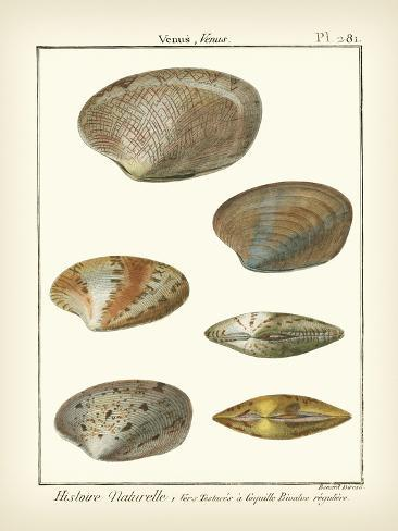 Venus Shells, Pl.281 Reproduction d'art