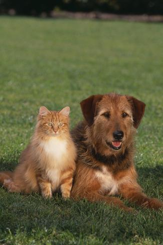 Dog and Cat Sitting Together on Lawn Reproduction photographique