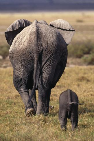Mother and Baby Elephant Reproduction photographique