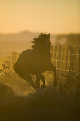 Spanish Mustang Running Reproduction photographique