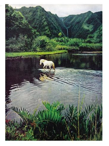 Horse Wading in Stream Amid Hills in Papera Region, South Seas Reproduction photographique