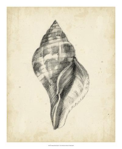 Antique Shell Study II Reproduction procédé giclée