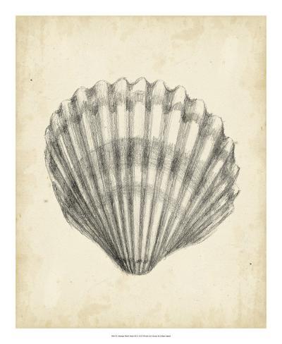 Antique Shell Study III Reproduction procédé giclée