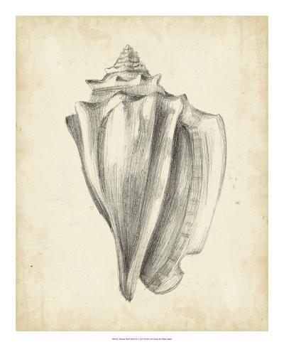 Antique Shell Study IV Reproduction procédé giclée