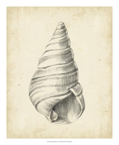Antique Shell Study V Reproduction procédé giclée