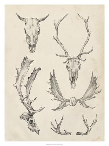 Skull & Antler Study II Reproduction procédé giclée