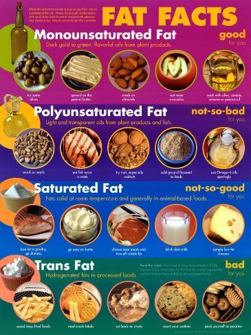 Fat Facts Affiche en laminé