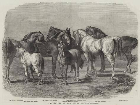 Favourites of the Royal Stud Reproduction procédé giclée