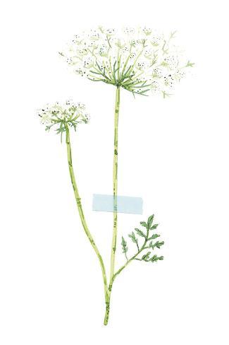 Field Flower V Reproduction procédé giclée
