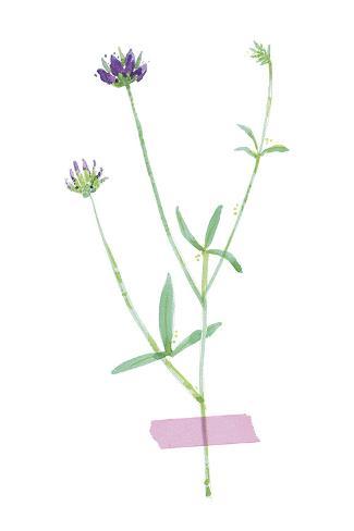 Field Flower VII Reproduction procédé giclée