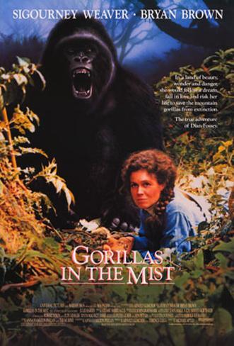 Gorilles dans la brume Poster
