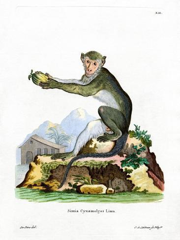Green Monkey Reproduction procédé giclée