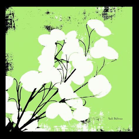 Light Green Money Plant Reproduction photographique