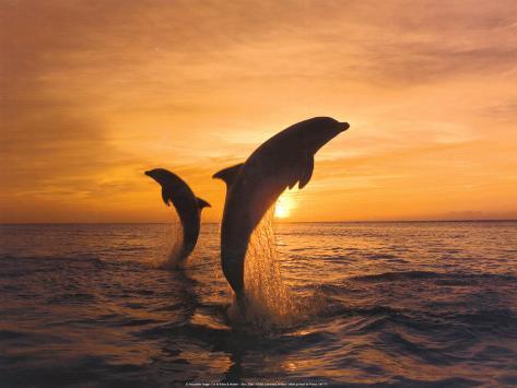 Deux dauphins Reproduction d'art