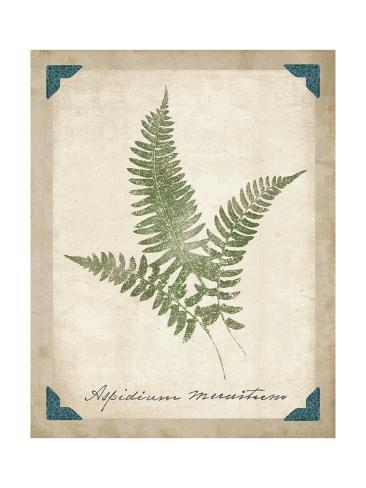 Vintage Ferns X Reproduction giclée Premium