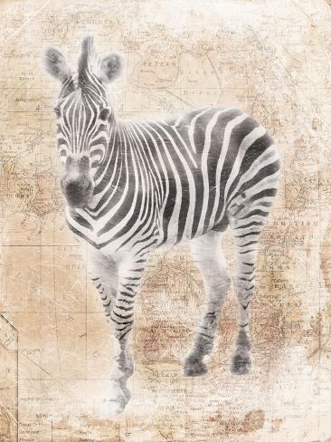 Zèbre africain Reproduction d'art