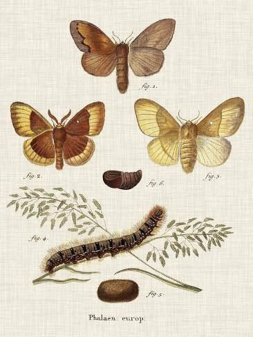 Life Cycle of a Moth I Reproduction d'art