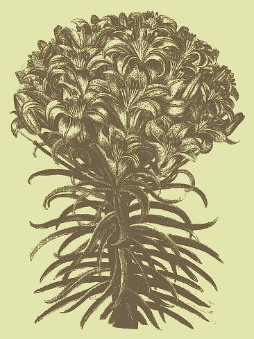 Lilies, no. 4 Reproduction d'art