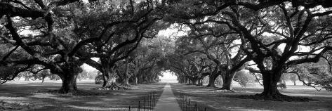 Louisiana, New Orleans, Brick Path Through Alley of Oak Trees Reproduction photographique Premium