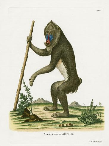 Mandrill Reproduction procédé giclée