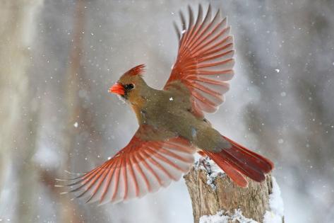 Snow Storm Reproduction photographique
