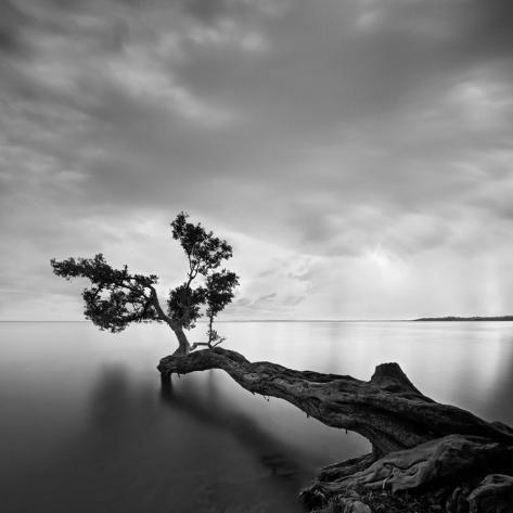 L'arbre et l'eau Reproduction d'art