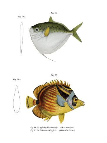 Moonfish Reproduction procédé giclée