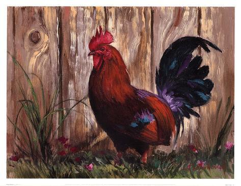 Bantie Rooster Reproduction d'art